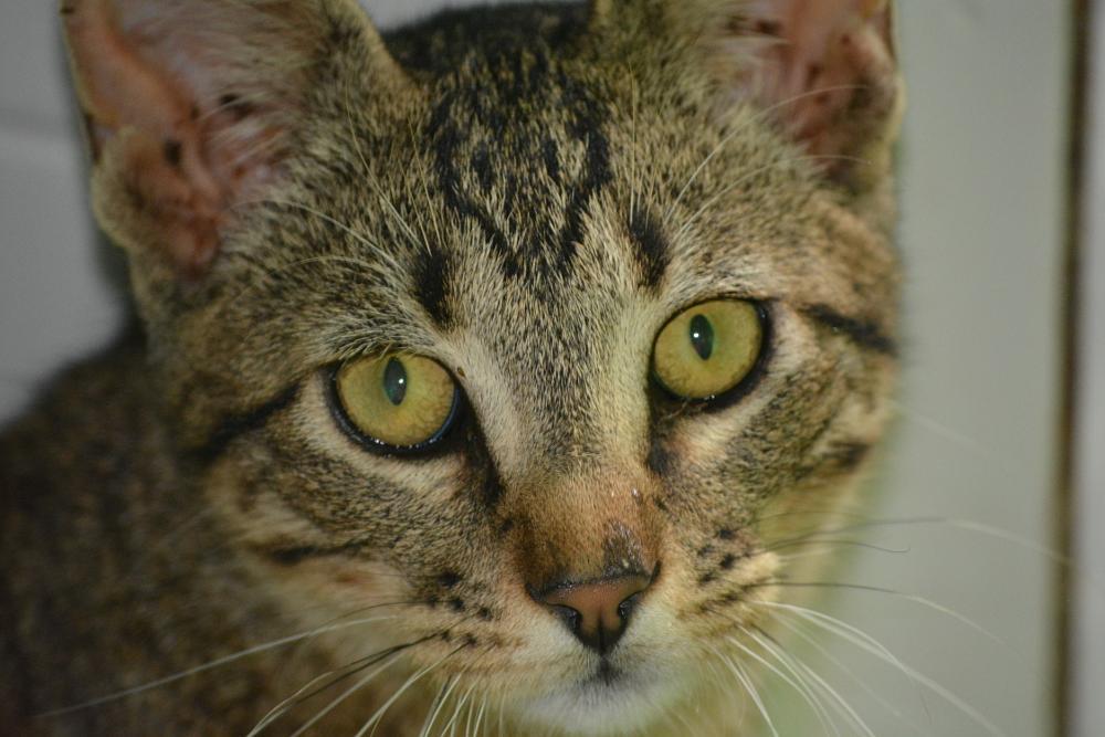 Photo in Animal #stare #cat #feline #eyes #pet