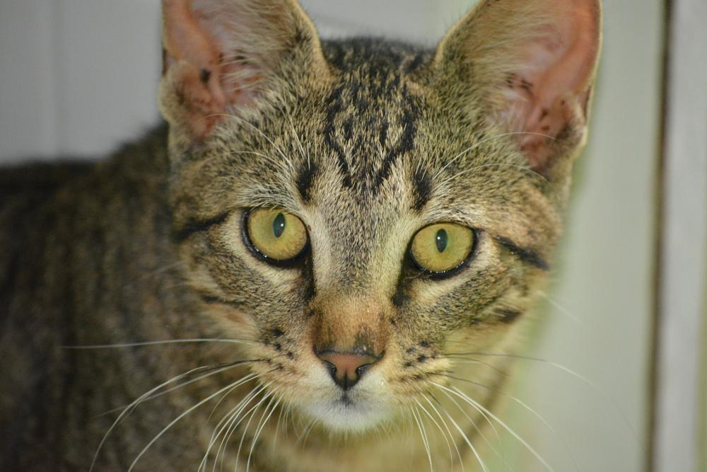 Photo in Animal #cat #feline #stare #eyes #pet