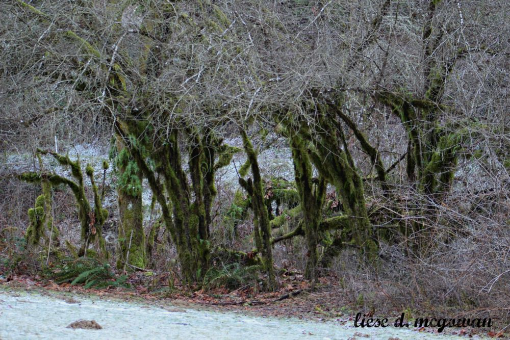 Photo in Nature #frost #moss #trees #river