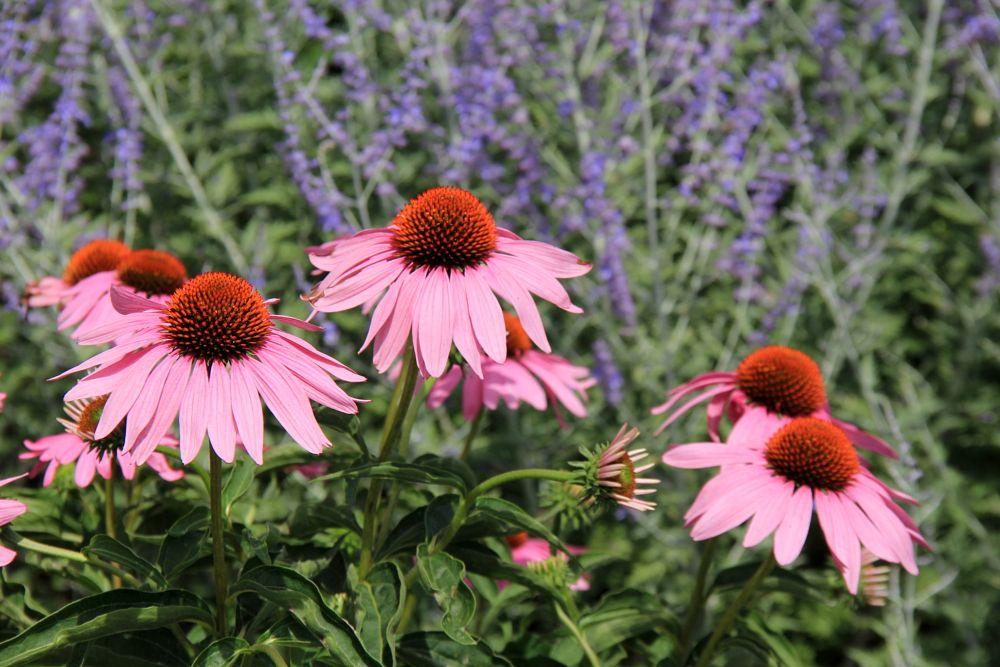 Photo in Nature #garden #wildflowers #landscape #nature