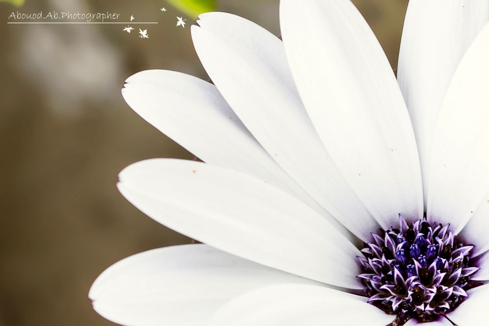 Photo in Nature #2013 #ypa2013 #nature #flower #macro
