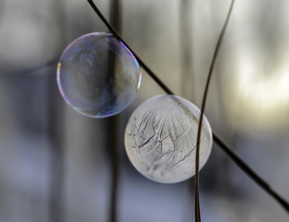 Photo in Macro #frozen bubbles #bubbles #cold #macro #winter