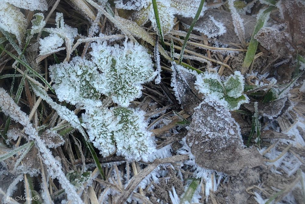 Photo in Nature #frost #nature #macro #winter #new year