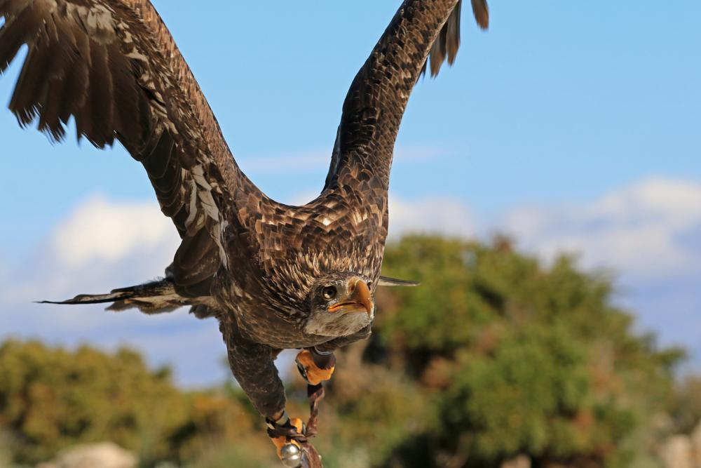 Photo in Animal #falconry #birds #nature
