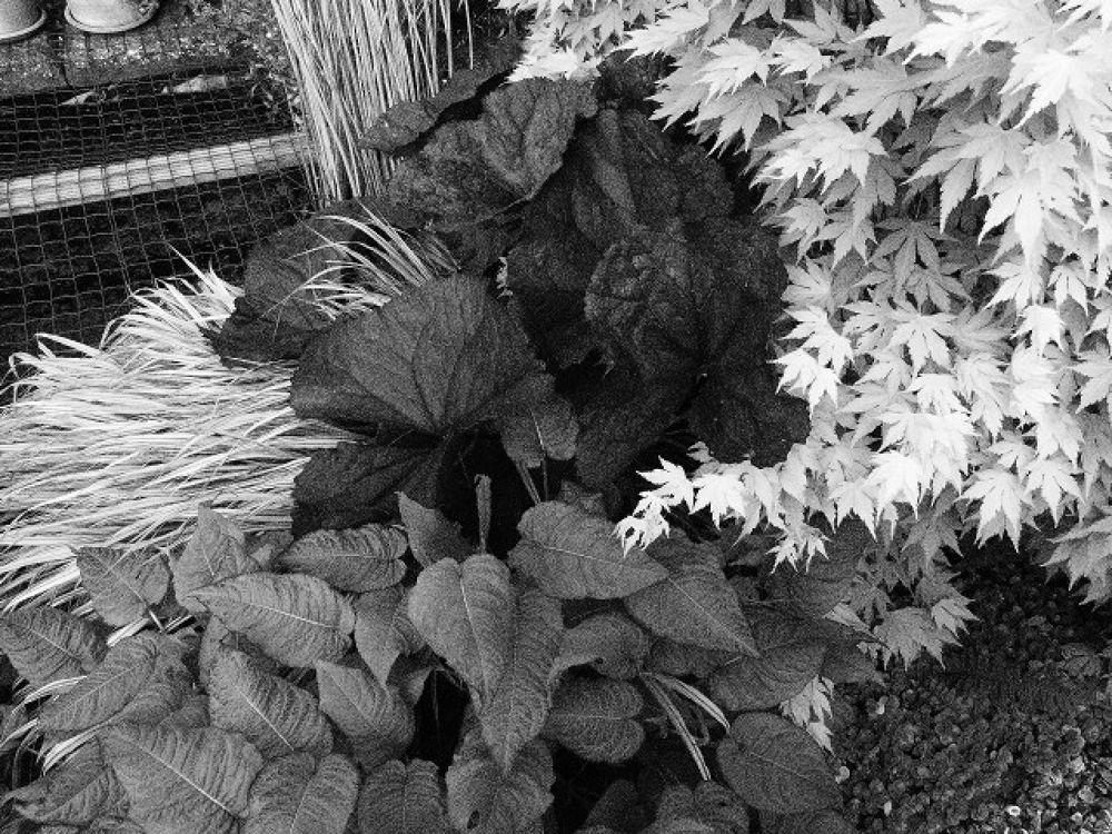 Photo in Random #garden #black and white #textures #tones #plants #plant