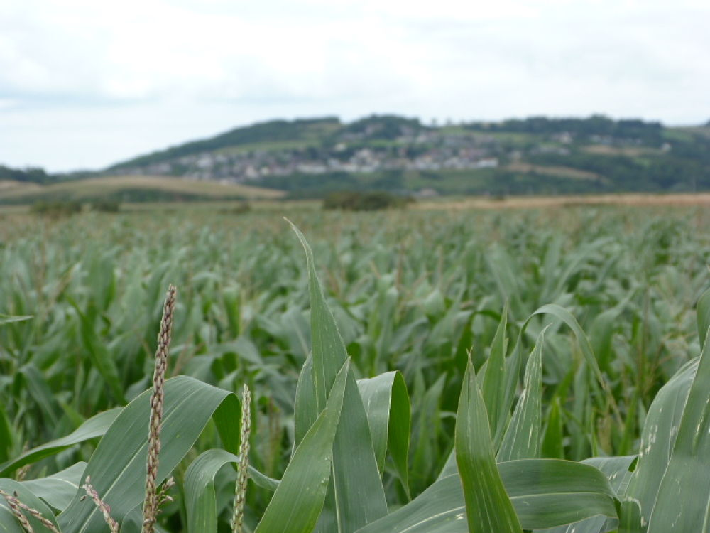 Photo in Landscape #crops #field #farm #brean #brean down
