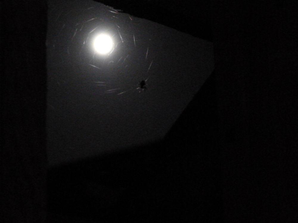 Photo in Random #spider #spider web #moon #night #night sky #web