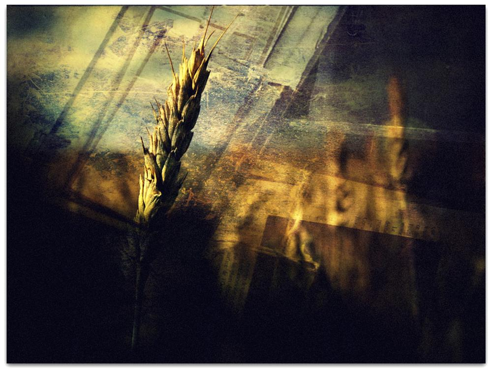 Photo in Abstract #ohrbinah #color #nature