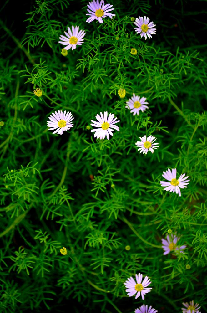 Photo in Landscape #green #white #flowers