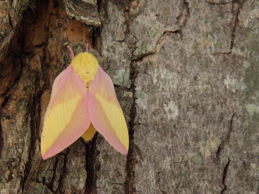 Photo in Nature #moth #tree #bark