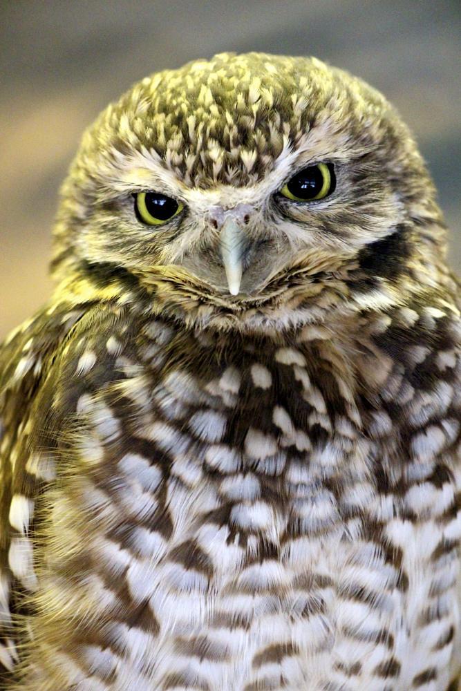 Photo in Nature #owl #bird