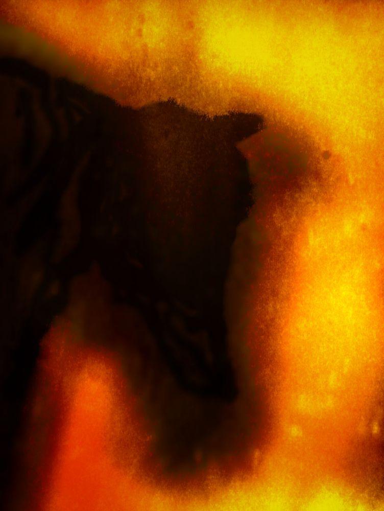 Photo in Fine Art #sillouette #strange #foggy #mystery #animal #shadow