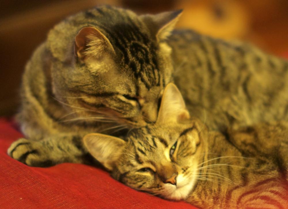 Photo in Animal #cat #tabby #kitten