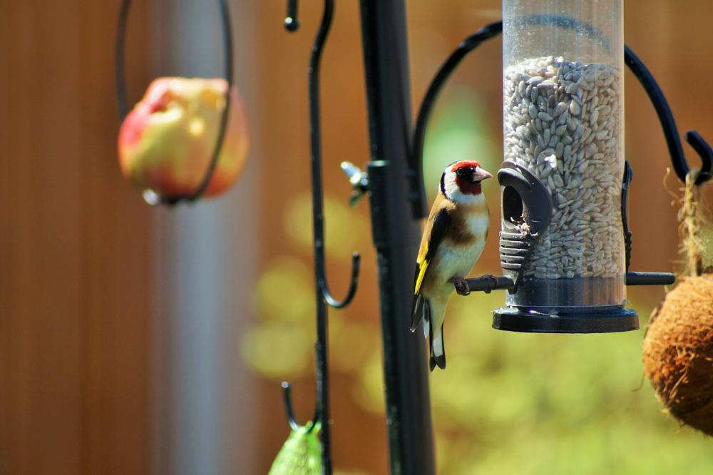 Photo in Nature #baby goldfinch