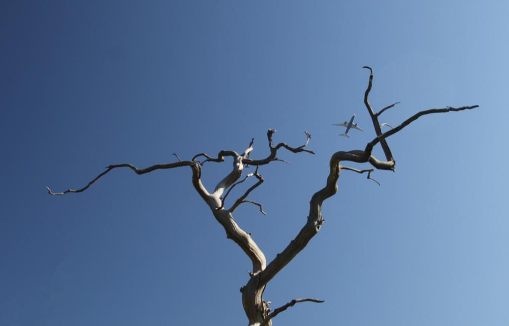 Photo in Nature #tree #bird #plane #sky