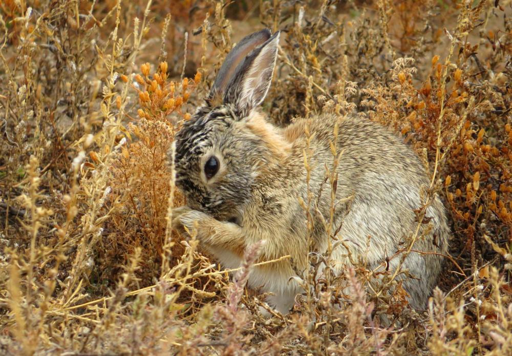 Photo in Animal #rabbit #bunny #rain #nature