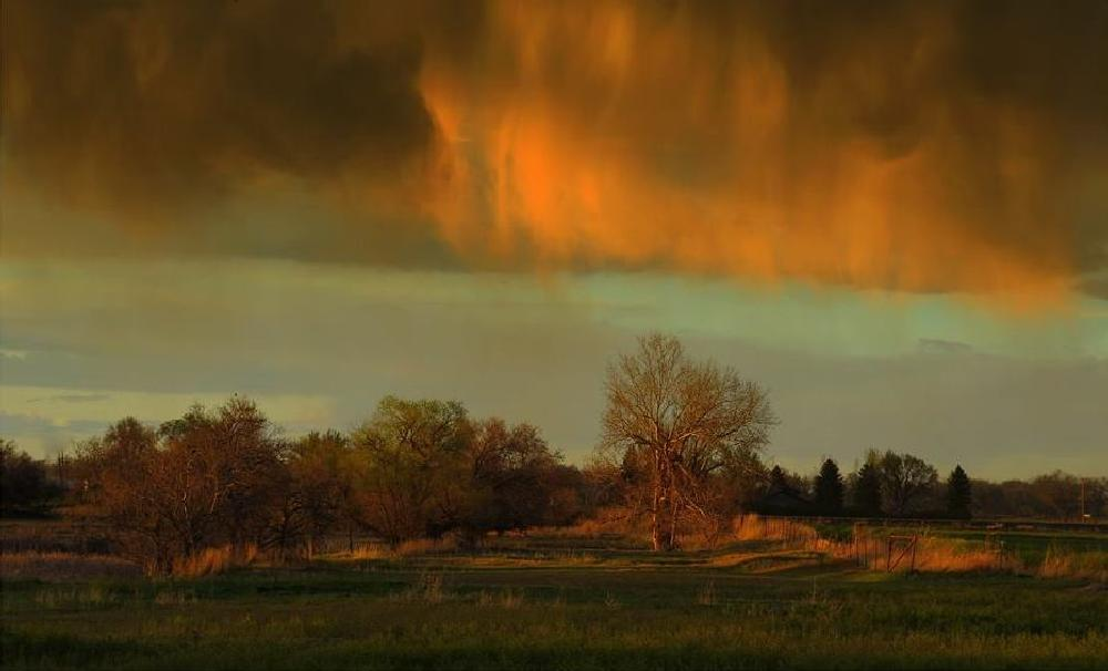 Photo in Landscape #nature #light #sunset #pasture