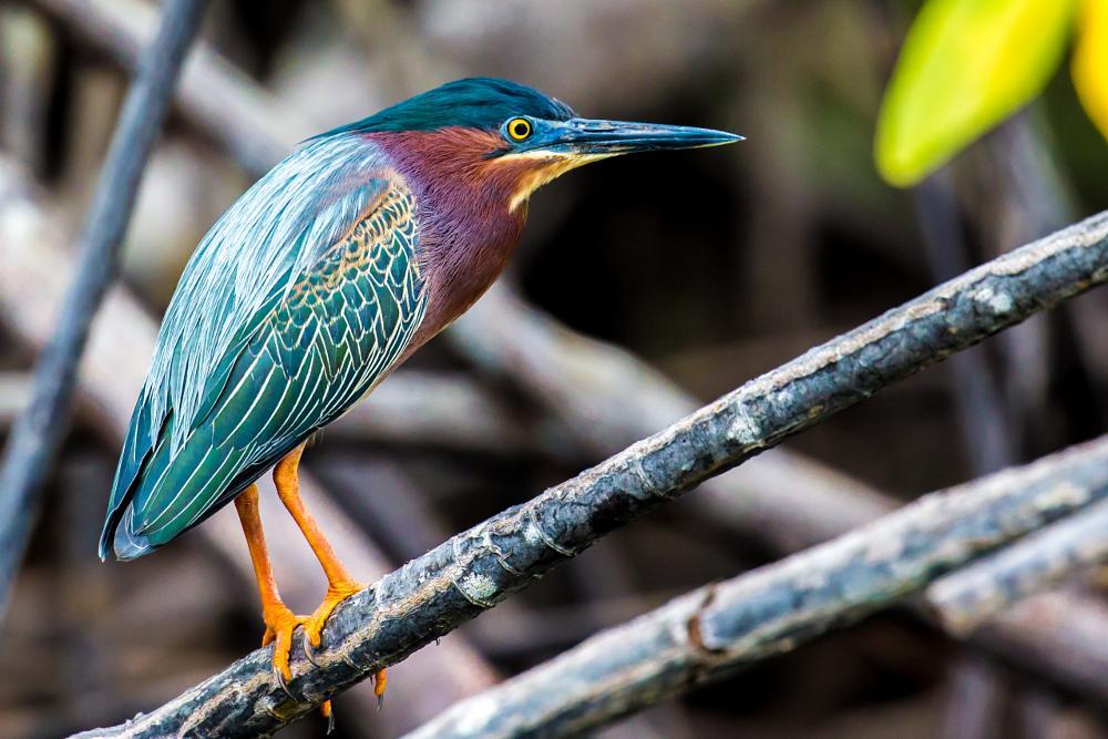 Photo in Animal #birds #costa rica