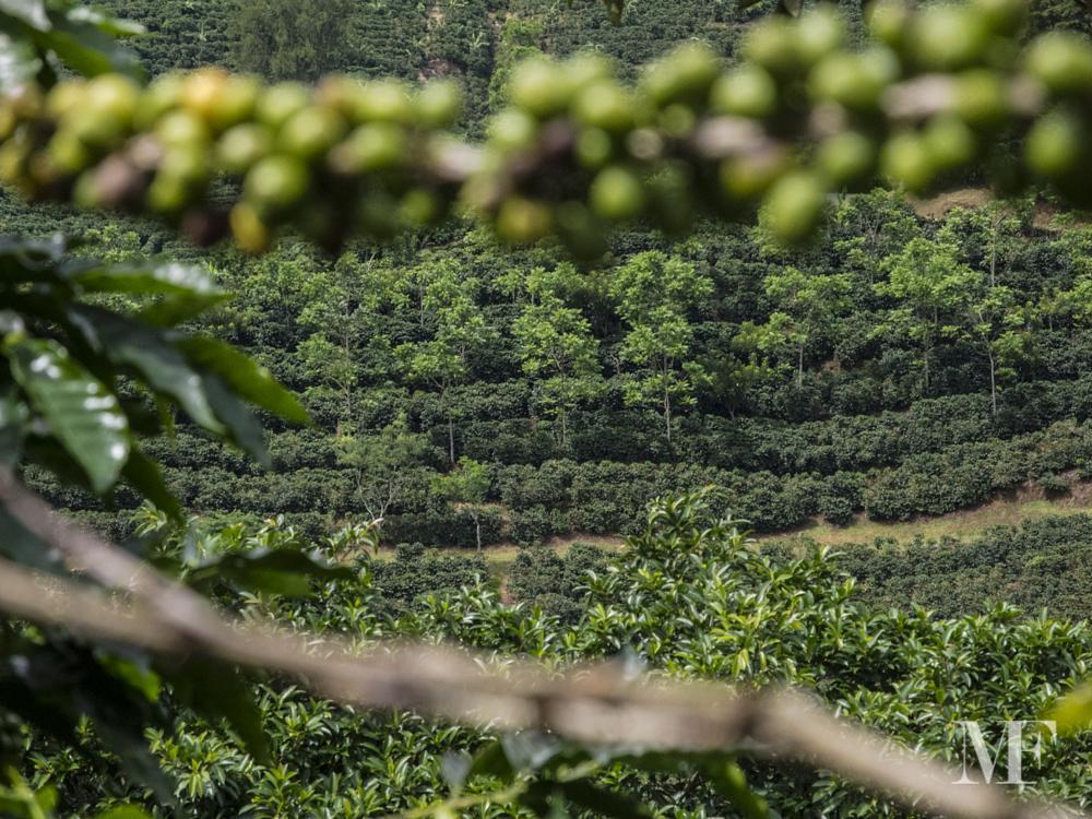 Photo in Nature #coffee #costa rica #arabica #growers