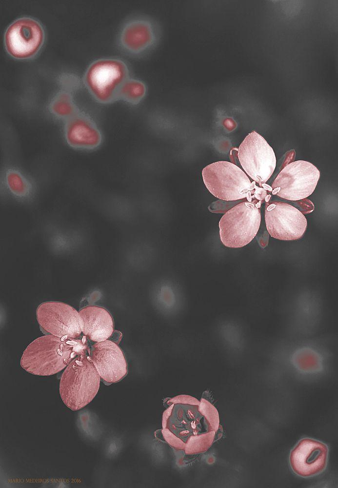 Photo in Macro #macro #spring #flower #patterns