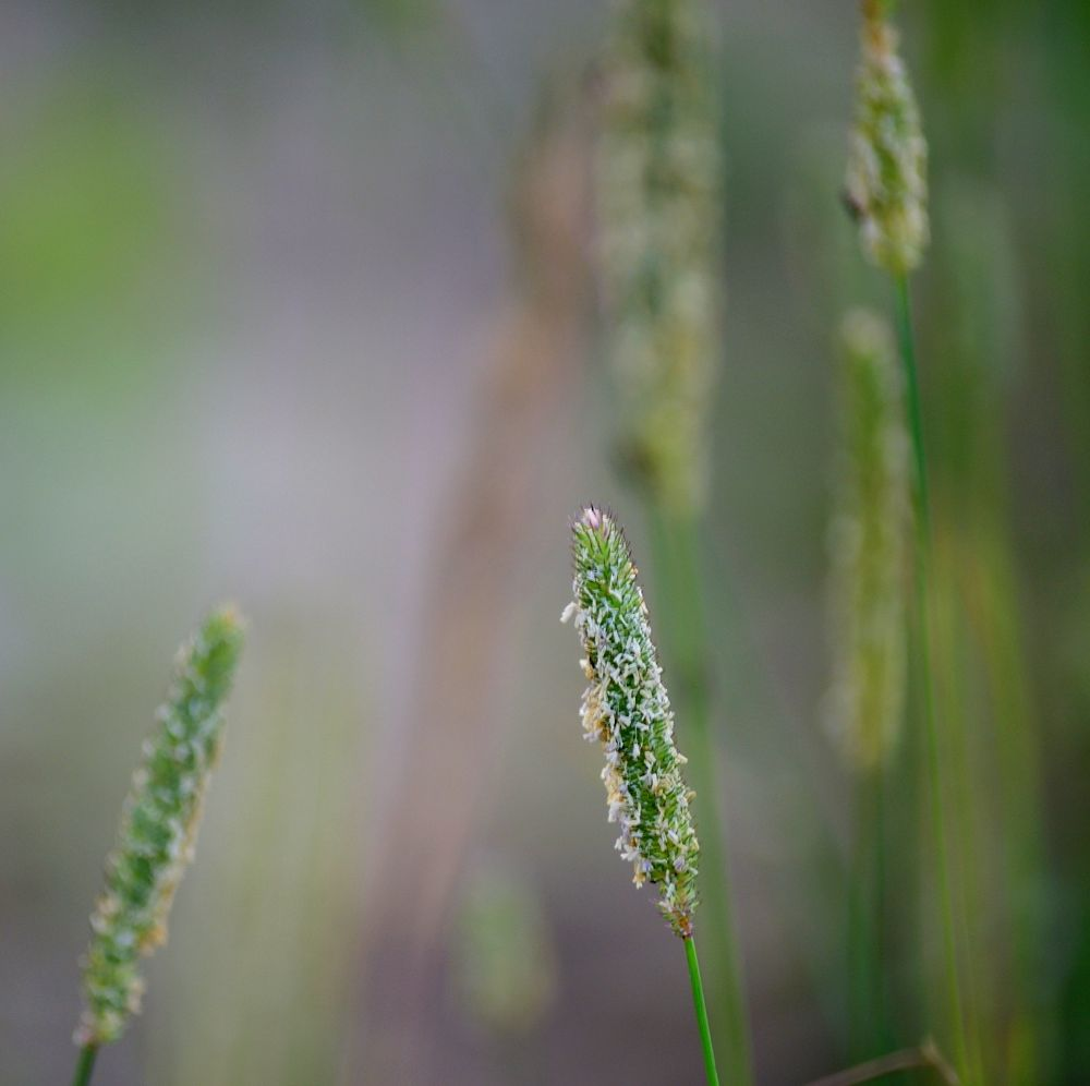 Photo in Nature #plant #meadow #nature #poland #green