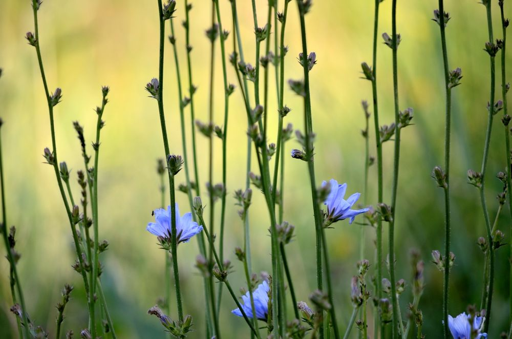 Photo in Nature #plant #flower #meadow #nature #poland
