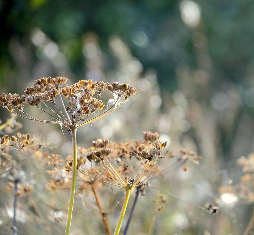 Photo in Nature #meadow #grass #colours #nature #plant #plants #bokeh #summer #poland #nikon #sun-light