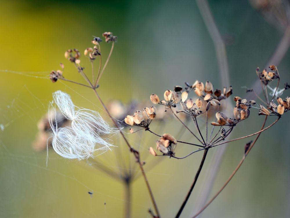 Photo in Nature #meadow #colour #nature #plant #plants #summer #grass #macro #nikon #poland