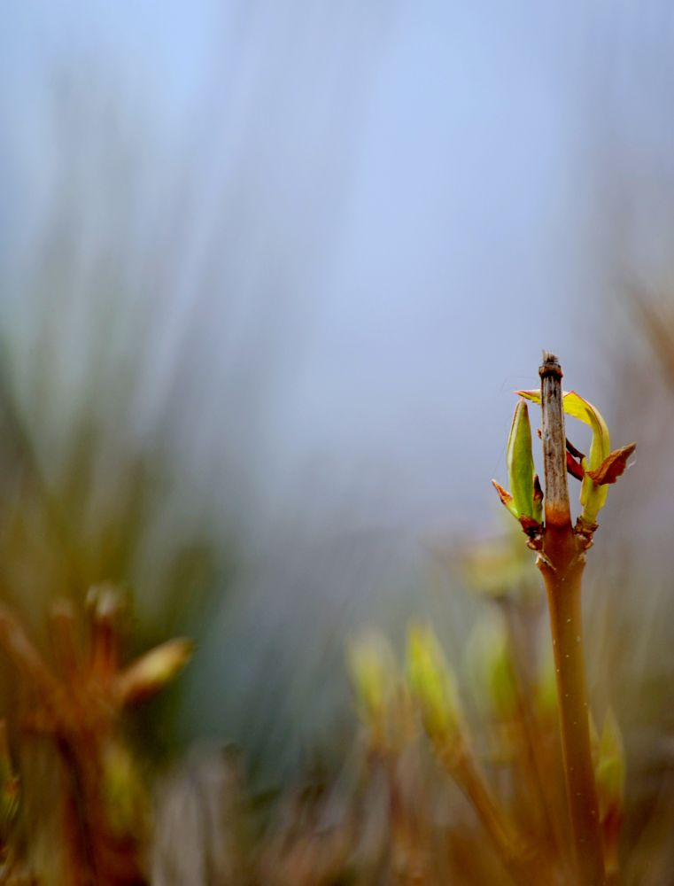 Photo in Nature #nature #spring #twig #plants #young leaves #rising #park #nikon #outdoor