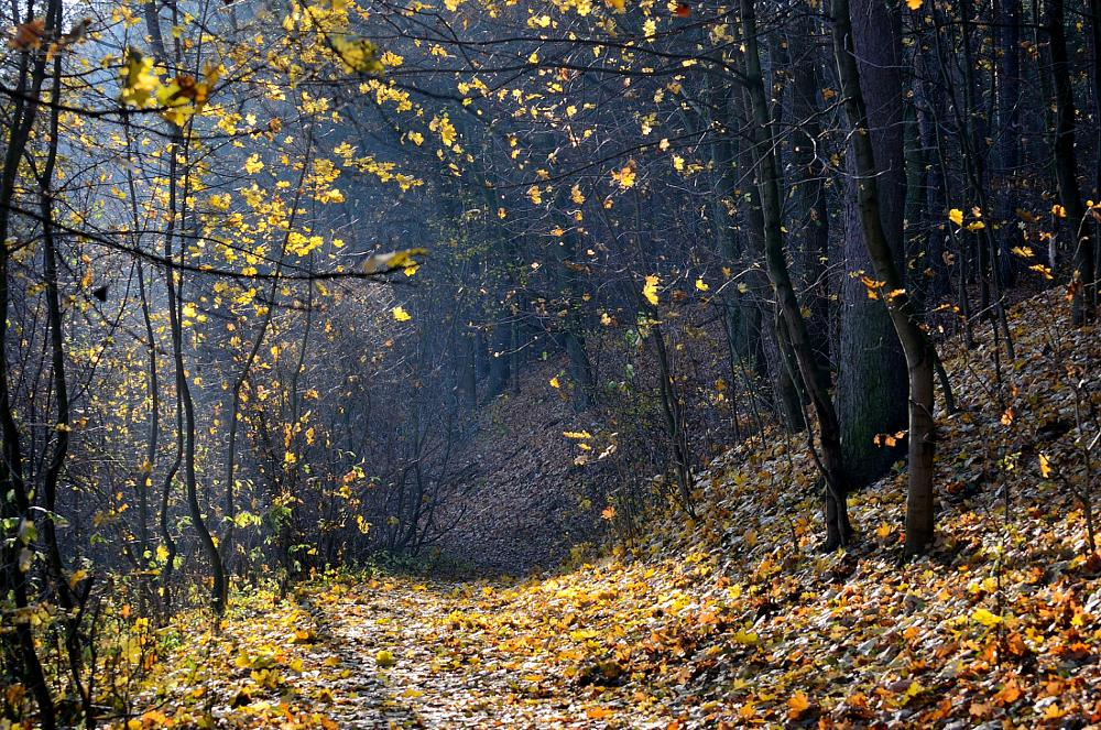Photo in Nature #forest #nature #autumn #autumn in forest #leaves #trees #light #sunlight #warmia #poland #nikon