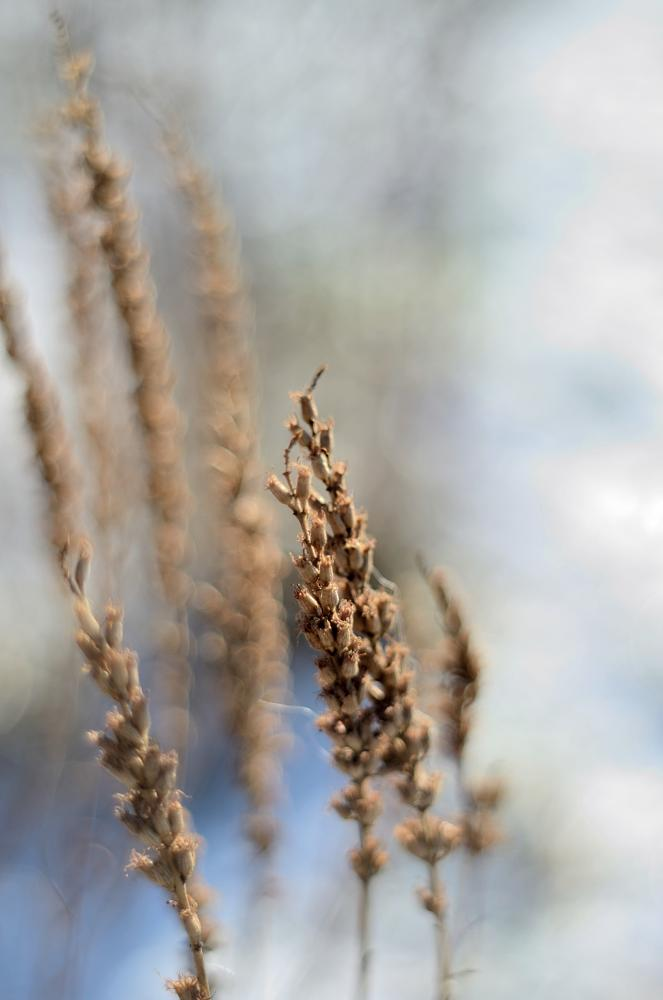 Photo in Nature #winter #nature #meadow #snow #plants #dry plants #frost #frozen #composition #poland #nikon