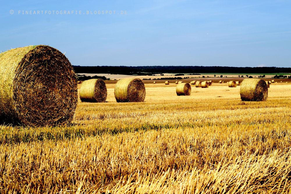 Photo in Landscape #stroh #strohballen #ernte #feld #getreide #harvest #time #summer #straw bale #field