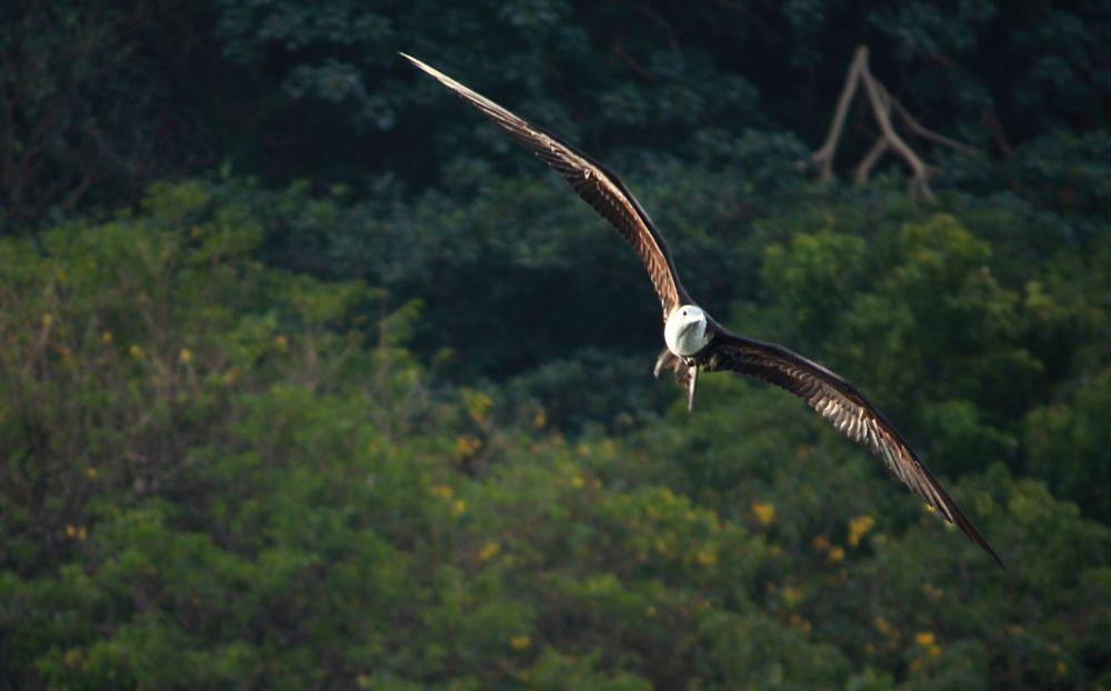 Photo in Animal #boobies_flying