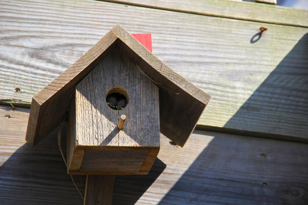 Photo in Nature #flowers #nursery #nest #birds #ny #cold spring