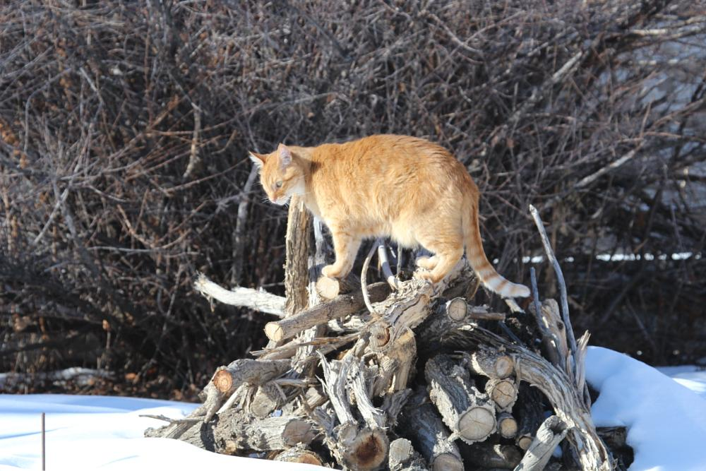 Photo in Animal #cat #woodpile #hill