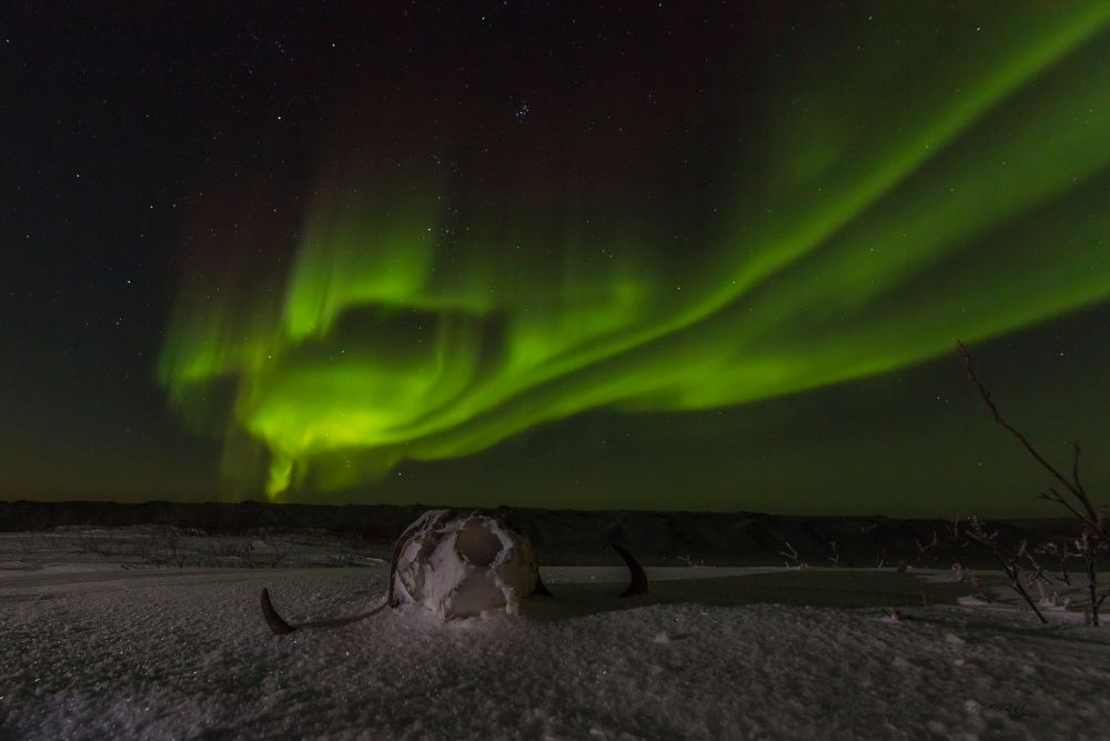 Photo in Nature #canada #arctic #nunavut #night #winter #december #snow #frozen #muskox #musk-ox #skull #northern lights #aurora #borealis #time-lapse #syrp #genie #canon #5dmkiii #mathieu dumond #umingmak productions #cold #nature #outdoor