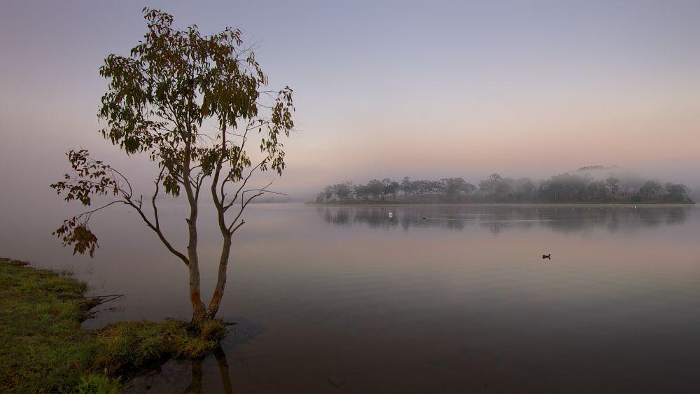 Photo in Random #fog #morning #lake #water #tree #lake wyaralong