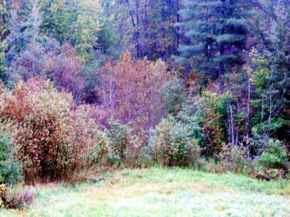 Photo in Random #trees #fall #colors #light #pi