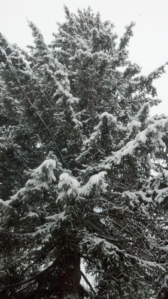 Photo in Random #tree #snow