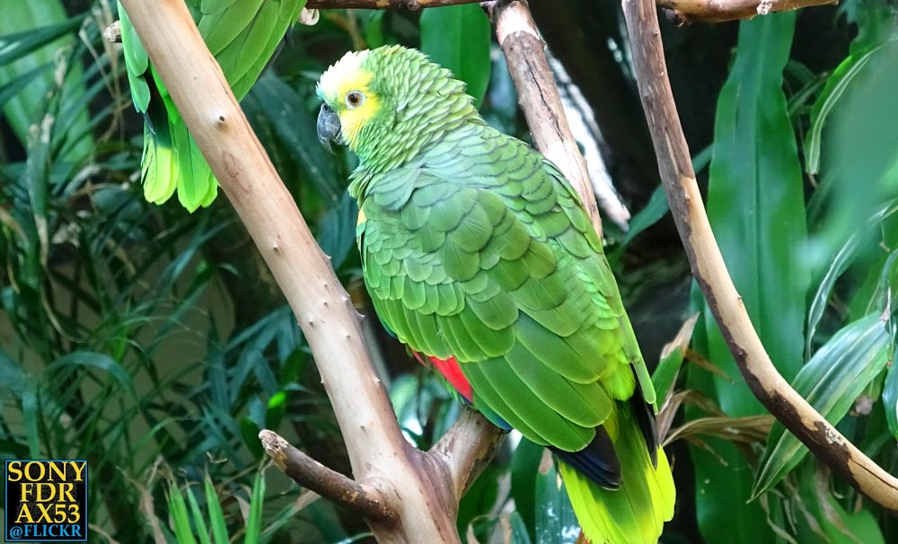 Photo in Animal #parrot #parrots #birds #exotic bird #amazon #animal life #nature