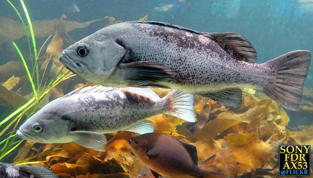 Photo in Animal #fish #animal #animals #sea life #under water #nature
