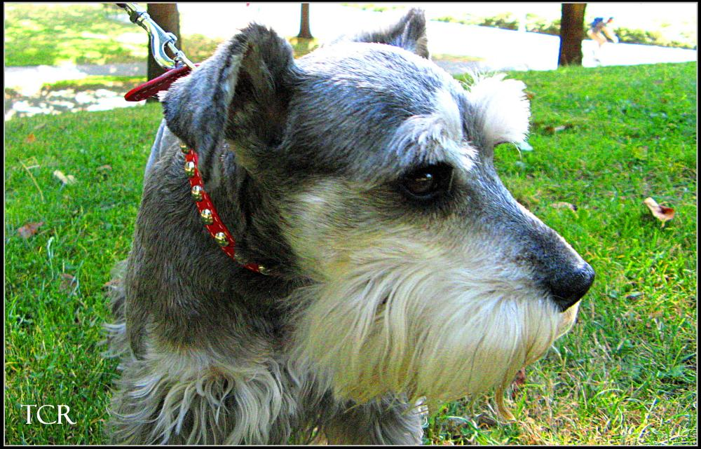 Photo in Family #family #dog #dogs #pet #pets #pooch #animal #animals #friend #greys