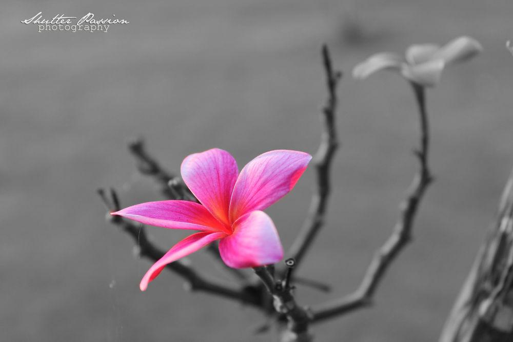 Photo in Nature #pink #flower #macro #nature