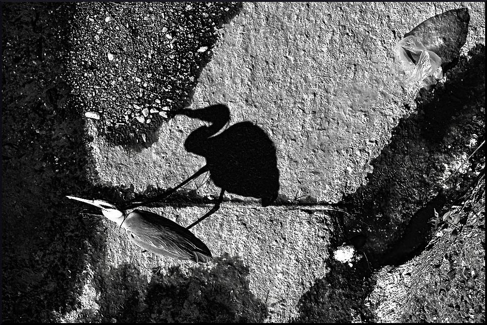 Photo in Black and White #heron #b&w #noir #river