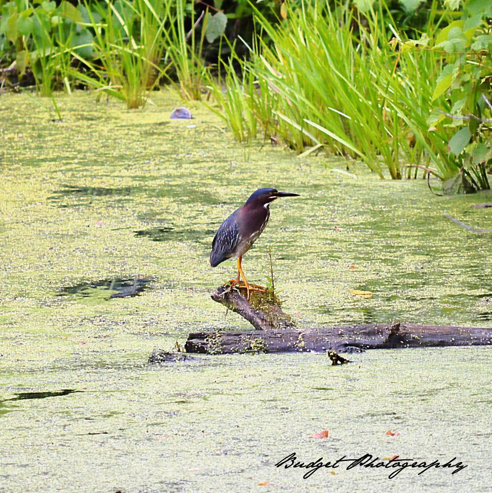 Photo in Animal #birds #photography #nature #animals