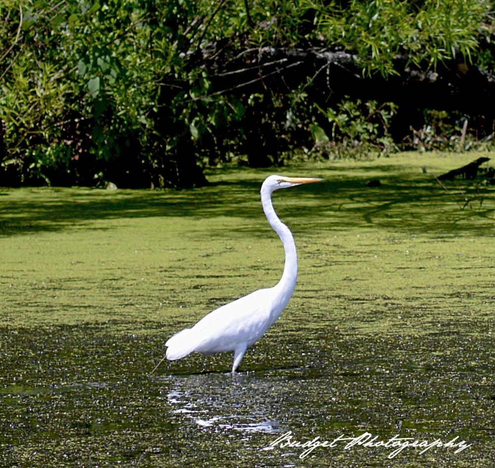 Photo in Animal #birds #animals #nature #photography