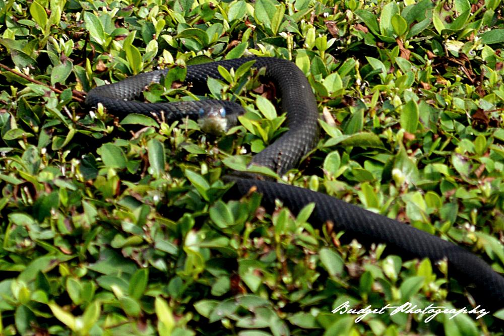 Photo in Animal #snakes #animals #photography