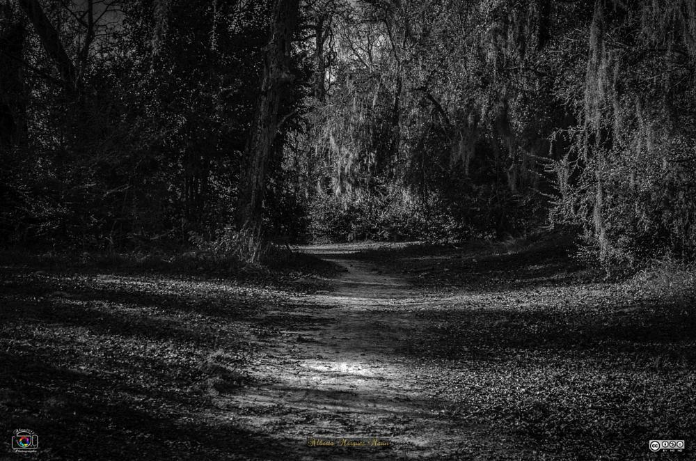 Photo in Black and White #wildwood #2015 #houston