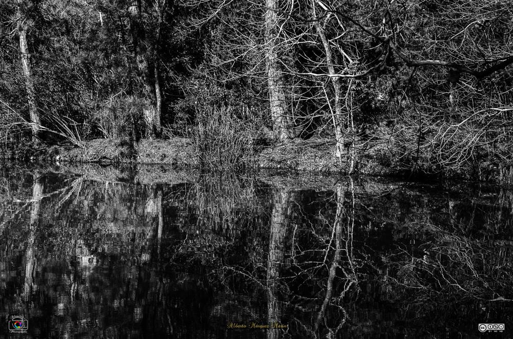 Photo in Black and White #reflection #2015 #houston