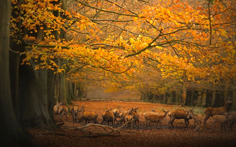 Photo in Random #fall #wild life #deer #forest #autumn #sony #sonyalpha #imaginarium #a99ii